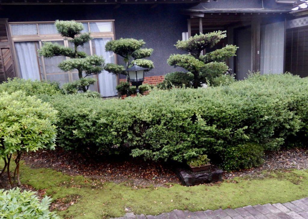 伐採前の状況、これでも両親が亡くなった後に、マキと松を伐採している。